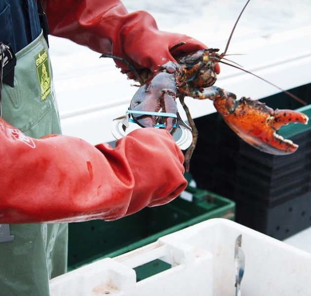 Lobster Setting Day in Prince Edward Island 2